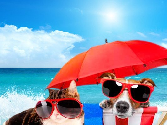 Holidays with your pet magic villa benidorm hotel